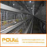 Las pollitas jaulas de pollos en China para la elaboración de jaula de aves de corral de Pollo
