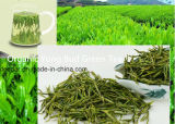 Tè verde fresco di Yong
