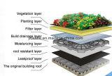 En plantant les matériaux TPO de toits imperméabiliser la membrane