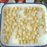 Venta caliente fresco de calidad Premium de cultivo de setas en conserva toda la