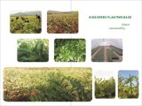 HPLC кислоты 5% ~98% естественной выдержки листьев Eucommia хлорогеновый