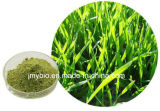 Органический порошок выдержки Wheatgrass, 4:1 ~10: 1, богатый витамин k