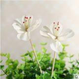 Fabrik revidiert vom Verkauf der trockenen Sola Blume für Reeddiffuser (zerstäuber)