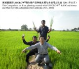 Удобрение Unigrow био органическое на рисе засаживая, сопротивляет взрыву риса и трущобам оболочки