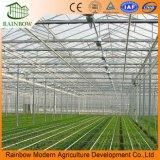 Высокое качество материала Венло Тип стекла выбросов парниковых газов на томаты// огурца салат