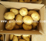 Новая Голландия урожая картофеля из Китая