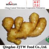 Китай имбиря свежего имбиря 150 gr