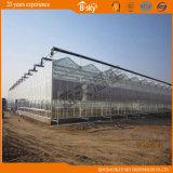 Chambre verte de Multi-Envergure en verre pour culture de légumes