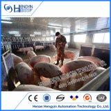 Готовое Pig фермы проекта Penning подачи питьевой система вентиляции для продажи