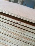 grado del pegamento BB/CC de la base E1 del álamo de la madera contrachapada del cedro de lápiz de 6m m