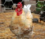 """1/4 di """", 3/4 """" di rete metallica esagonale poco costosa di /Galvanized della rete metallica di /Rabbit del collegare di pollo"""