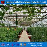 야채를 위한 경간 Polytunnel 산업 다중 플라스틱 폴리탄산염 유리제 온실
