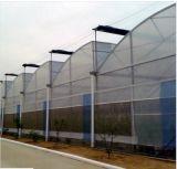 Chambre verte d'agriculture de revêtement de film plastique grande