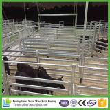 Pátio galvanizado barato com cabine de gado galvanizado com portão
