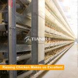 Système agricole automatique de volaille pour les couches d'oeufs