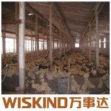 La luz de la estructura de acero galvanizado en caliente de la casa de aves de corral