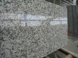 Big blanc fleur G439 tuiles polies&Dalles de granit&comptoir