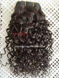 Franzose-Wellen-Qualitäts-brasilianisches Haar-Spinnen (PPG-l-01587)