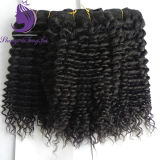 Indian Hair Kinky Curly Virgin Hair Weft
