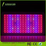 Hydroponic 고성능 LED 플랜트 빛 900W 가득 차있는 스펙트럼은 빛을 증가한다
