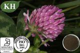 Extrato natural elevado do trevo vermelho dos Isoflavones 10%-80% de Kingherbs