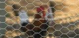 Opleveren van de Draad van Sailin het Hexagonale voor de Omheining van het Gevogelte