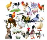 Humate натрия, растворимости воды, используемые в области аквакультуры, языке для скота и долиною сыновей Енномовых,