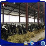 Ferme de bétail de structure métallique jetée en vente