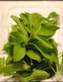 Natürlicher und gesunder Stoffenzymatisch geänderter Stevia