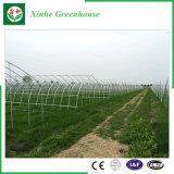 Agriculture des serres chaudes en plastique pour des légumes/fleurs