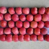 175-198 один слой краснеет красный FUJI Apple