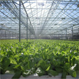 Groen Huis voor Vegtables met het Koelen en van de Irrigatie Systeem