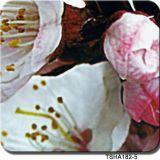 Tsautop 1m de largura transferência de água impressão filme flor