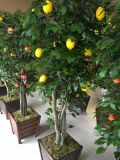 Plantas y flores artificiales de Lemon Tree Gu-112130854