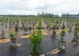 Tejido plano de PP Tejido tejido de control de malas hierbas