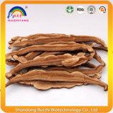 참피나무 부피에 있는 사나운 Ganoderma Lucidum 버섯 인기 상품