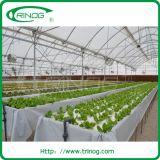 Agricoltura Film Greenhouse per lattuga idroponica
