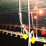 Prefab Steel Construction House for Chicken Raising