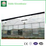 판매를 위한 중국 공급자 야채 또는 정원 또는 꽃 또는 농장 플레스틱 필름 녹색 집