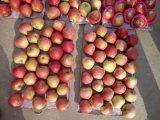글로벌 간격에 의하여 증명서를 주는 신선한 Qinguan Apple
