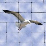 Сеть 100% анти- птицы девственницы пластичная для плетения клетки плодоовощ