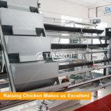 Cages de batterie de volaille de qualité de modèle pour les pondeuses