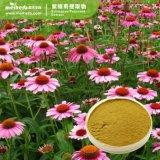 1%-4%acide Chicoric Echinacea P. E. /Echinacea Purpurea extrait de plante
