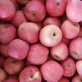 Goldener Lieferant von frischem erröten roter FUJI Apple