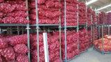 양파를 수출하는 중국 고품질