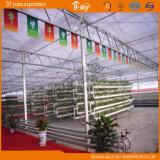 Chambre verte de feuille durable de polycarbonate pour planter des légumes