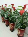 L'alta qualità del giglio di Calla artificiale fiorisce Gu-Jy929214112