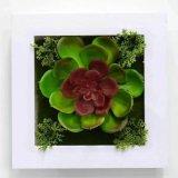 Plantes et fleurs artificielles de la centrale succulente Gu-Jy823214440