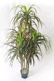 Il la cosa migliore vendendo 5 piante artificiali delle teste del Yucca Gu-Mx08092138