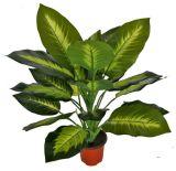 20 Lvs를 가진 인공적인 플랜트 Dieffenbachia의 고품질